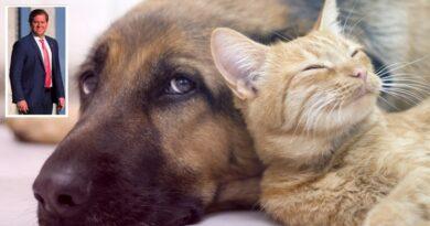 Por mais proteção animal, Marx Beltrão propõe criação de Registro Geral de Caninos e Felinos com microchipagem de cães e gatos